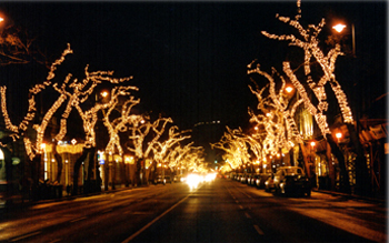 the avenue lit up in the Christmas season