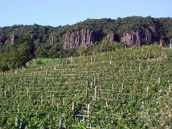 a vineyard with basalt rock in the background, Badacsony Hill