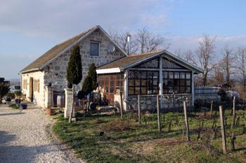 A vineyard in Etyek