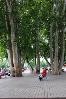 people sitting on benches under the shade of plane trees