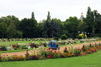 the rose garden with flowers of red, orange, pink white