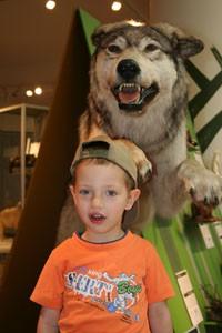 predators_nat_hist_museum_budapest02