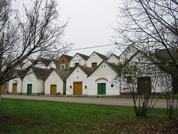 two rows of white wine cellars in Villany