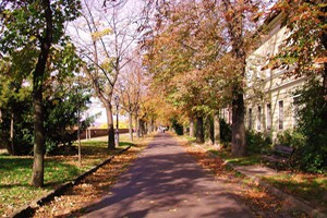 walkways lined with trees in Autumn in Buda Castle