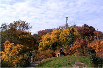colorful foligae on the hill in autumn, Statue of Liberty can be seen