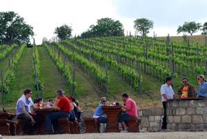 Wine Tasting in Etyek with Transfer